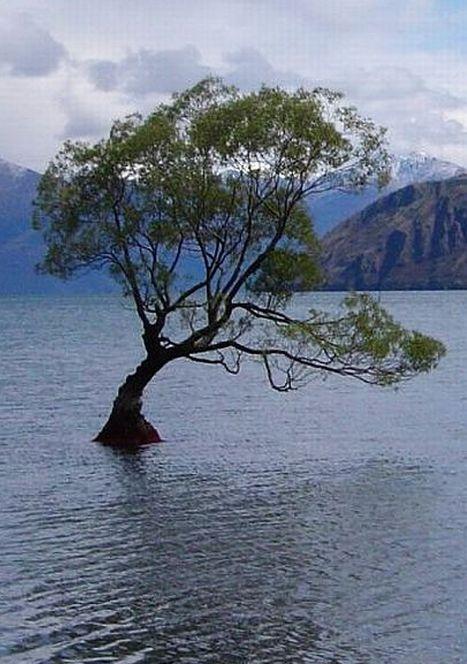 http://www.bartcop.com/New-Zealand-tree-lake-sm.jpg