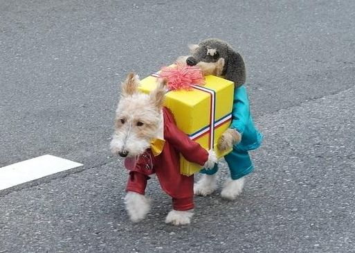 O/T the best dog christmas costume ever.