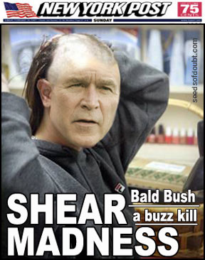 Shear Madness Bush
